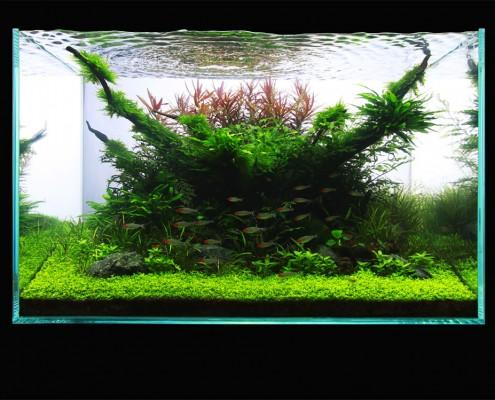 Aquabase - 2012