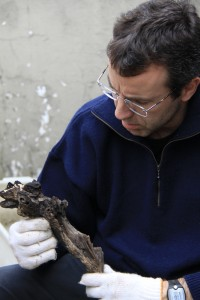 Professor - Luca Galarraga